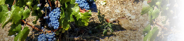 region_priorat